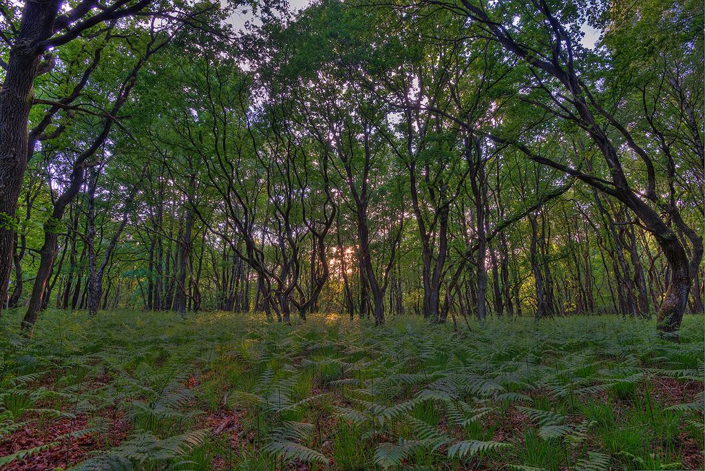 Grillig bos met varens op de grond