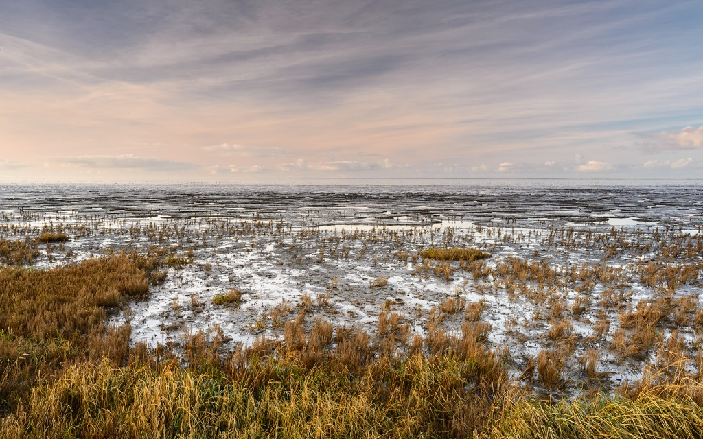 Waddenzee-9-Koehool-1536x960