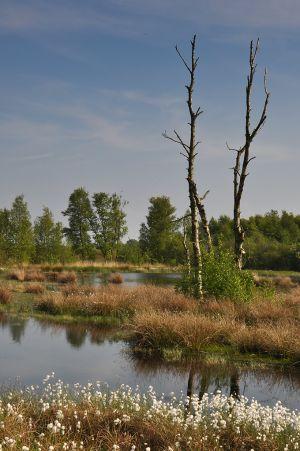 Drenthe-5.jpg
